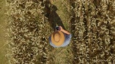 Zoom Man Hat in Young Wheat Field and Examining Crop. Aerial View Directly Above a Farmer Monitoring His Wheat With Tablet. Wheat Field Farmer Landscape Nature Agriculture Growth Drone Footage Man. Стоковые видеозаписи