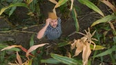 Zoom Man Hat in Young Corn Field and Examining Crop. Aerial View Directly Above a Farmer Monitoring His Corn With. Corn Field Farmer Landscape Nature Agriculture Growth Drone Footage Man.