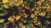 borovice : Autumn Colorful Forest From Above, Captured with Drone. Fall Orange, Green, Yellow, Red Leaves Trees Woods. Aerial View Flying Above Stunning Colorful Treetops with Bright Leaves on Sunny Day. Dostupné videozáznamy