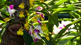 blooming : Beautiful Orchid flowers blooming in the garden. Stock Footage