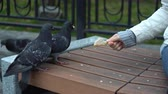 tart : Pigeons eat bread supported by a female hand, on a cold, cloudy day, standing on a bench in a city park, close-up shoot.