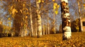 abrigo : Yellow dry leaves swing from the wind on the branches. Golden autumn in the birch grove in the park.