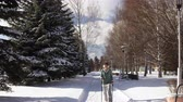 Young happy woman is engaged in Nordic walking on snowy path near the fir trees bright winter day in park.