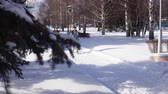 yürüteç : Young happy woman is engaged in Nordic walking on snowy path near the fir trees bright winter day in park.