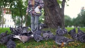 nutrir : Little European child feeding street pigeons with grain in the autumn park. A happy kid, being among the doves and throwing grain. Stock Footage