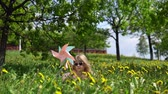 блондин : Little cute girl playing with a multicolored pinwheel, a happy child is sitting in dandelions on a spring sunny day. Стоковые видеозаписи