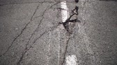 culpa : Camera moves along deep cracks in asphalt with white dashed marking line. View of fault in road, consequences of natural disaster, earthquake or man-made disaster.