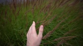 с шипами : Close-up of a mans hand touching ripe dry spikelets of wild grass on a cloudy evening, handheld shot. Стоковые видеозаписи