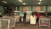 yoksulluk : OLOMOUC, CZECH REPUBLIC, APRIL 25, 2018: Line for industrial sorting of different types of plastics waste. Poor and people job. They are sorting on blue, green and transparent PET bottles, recycling Stok Video