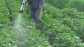 decemlineata : Chemical pesticide modern spray of Solanum tuberosum potato against Leptinotarsa decemlineata potato colorado beetle, the device is using man mist blower spraying