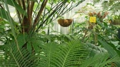 Tropical greenhouse with palms, cycads and other plants with forests and rainforest near the equator, to preserve the genofond cycad, protection of endangered and rare species cultivation Cycas Vídeos
