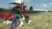 muestreo : OLOMOUC, CZECH REPUBLIC, SEPTEMBER 1, 2018: Sampling for scientific purposes for analysis barley Hordeum vulgare bag and experimentation and development of science new fertilizers Archivo de Video