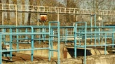 sanitation : Waste water and wastewater treatment plant old and rusty railing iron processes sedimentation, filtration, oxidation, Biochemical and chemical, important for the healthy environment and nature Stock Footage