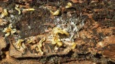 besouro : Caterpillars larvae bark beetle pest Ips typographus, spruce and bast tree infested and attacked by European spruce, making their way, wood larva, clear cut calamity global warming, burrow hole detail