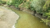 durva : Drought and drying river Morava water, dry up the soil cracked, eutrophication climate change, environmental disaster, lack of oxygen for the growth of cyanobacteria and algae Stock mozgókép