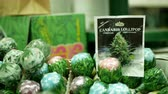PRAGUE, CZECH REPUBLIC, SEPTEMBER 9, 2019: Cannabis lollipops nicy gel shop or store Prague, packaged hemp sucker cannabidiol CBD seeds in relieves pain, leaf symbol, plastic packaging, sugar Stok Video