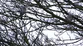 turtledove : Two doves on tree branches on a rainy day.