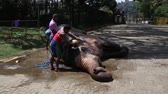 srilankan : Sri Lanka - February 1, 2015: Trained elephants is looked after by the locals are trained, clean, bathe. Stock Footage