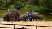 marfim : LAMPANG THAILAND MAY 5: Elephant walking to the pond at Thai Elephant Conservation center on May 5 2015 Lampang Thailand.
