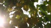 calm : Sunlight streaming through the leaves on a sunny day Stock Footage