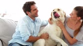 livingroom : Cute couple calling their labrador dog to the couch at home in living room