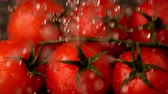 pouring : Water raining on cherry tomatoes in slow motion