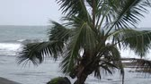 storm : A palm tree blows back and forth impending storm