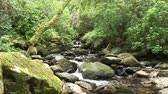 dream : A secluded stream surrounded by thick greenery Stock Footage