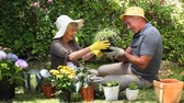 working parents : Aged couple gardening together in the garden