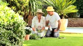 female : Retired couple potting plants outdoors in the sunshine Stock Footage