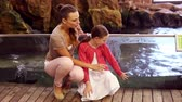male animal : Mother and daughter looking at penguins at the aquarium Stock Footage
