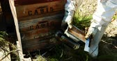 male animal : Beekeepers smoking the bees away from hive in apiary