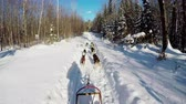 родословная : Musher riding sleigh on snowy land