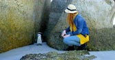 tučňák : Woman looking at penguin in the beach on a sunny day 4k