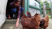 doméstico : Male farmer feeding hen in the hen house 4k
