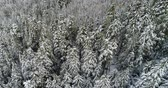 huzur : Aerial of pine forest on mountain slope covered with snow during winter 4k