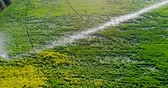 район : Aerial view of irrigation of green crops 4k