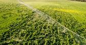 орошение : Aerial view of irrigation of green crops 4k