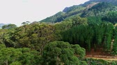 áfrica do sul : Dense green trees on the mountain slope 4k Vídeos