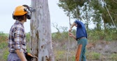 protective workwear : Lumberjacks working in forest at countryside 4k