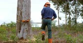 motorsäge : Lumberjack checking tree trunk in forest at countryside 4k