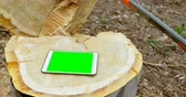toco : Digital tablet on tree stump in forest 4k