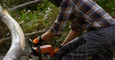 silvicultura : Side view of lumberjack cutting fallen tree in the forest 4k