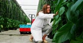 análise : Female scientist examining plants in the greenhouse 4k