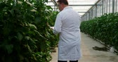 berenjenas : Male scientist with digital tablet examining plants in the greenhouse 4k Archivo de Video