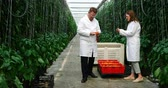 engradado : Two scientists examining yellow pepper in green house 4k Vídeos