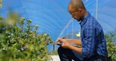 panoya : Side view of ethnic man crouching down to examine blueberries and writing it down on his clipboard in blueberry farm on a sunny day. In slow-motion