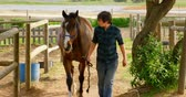 víkend : Front view of young woman walking with horse in stable. She caring for equine in the ranch in countryside.