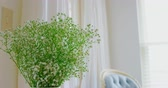 акцент : Flower in vase at home. Blue armchair in background 4k