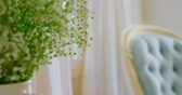 cortina : Close-up of Flower in vase at home. Blue armchair in background 4k